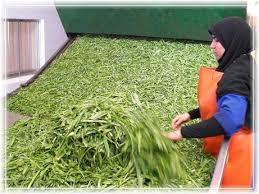 فروش سبزی خشک تهران