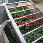 شرکت تولیدی سبزی خشک