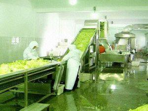 تولید سبزی خشک کارخانه ای