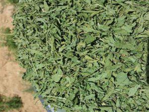 فروش فله ای سبزی خشک