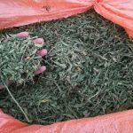 سلیت فروش سبزی خشک