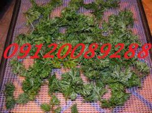قیمت سبزی خشک جعفری
