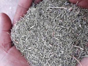 قیمت مرزه خشک
